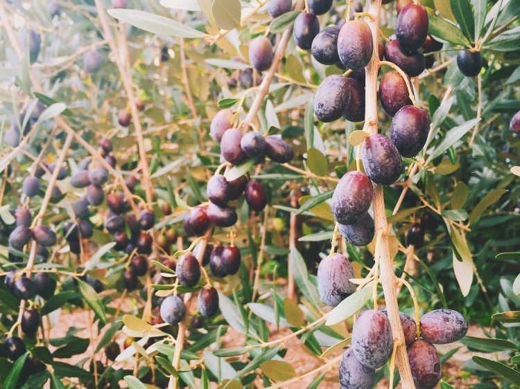 olives ready to be tasted